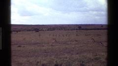 1983: winter in wild-park MARA TANZANIA Stock Footage