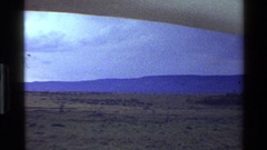 1983: a herd of white tail deer walk across a desolate plain near a mountain Stock Footage
