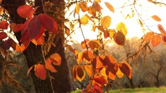 Rome Countryside, Autumn View Stock Footage