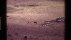 1983: a group of animals standing in a vast landscape MARA TANZANIA Stock Footage