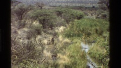 1983: wet area with ungulate walking; exotic birds on savanna KENYA Stock Footage