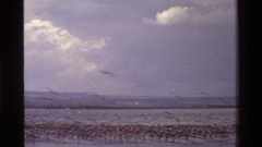 1983: a large group of birds flying on the top of seawater during day time KENYA Stock Footage