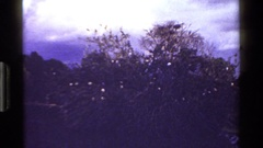 1983: herons flying and perched in hardwood tree with clouds and darkened sky Stock Footage