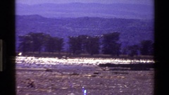 1983: birds flying in a very straight motion and creating nice scenery. MARA Stock Footage
