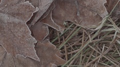 Brown fallen leaves covered in frost, super slow motion. Stock Footage