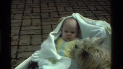 1975: a dog sniffing a grumpy baby CALIFORNIA Stock Footage