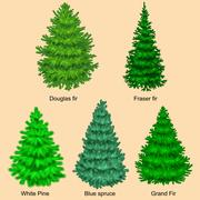 Set of christmas vector tree like fir or pine Blue spruce for New year cele.. Stock Illustration