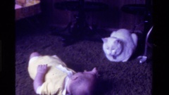 1975: cat playing with baby in house,looks very cute. CALIFORNIA Stock Footage