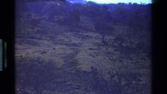 1983: a small family of baboons or monkeys in the wild set against a mountain Stock Footage