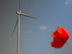 Clean and renewable energy wind power turbine and red poppy alternate focus 4k Stock Footage