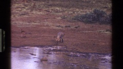 1983: number of wild animals are drinking water in a forest area KENYA Stock Footage