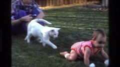 1977: a cat and a baby crawling outside in the grass CALIFORNIA Stock Footage