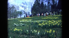 1969: people in the tulip park CALIFORNIA Stock Footage