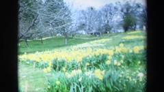 1969: visitors walk along hill near trees and above expanse of yellow flowers Stock Footage