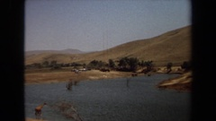 1971: animals drinking water from a river side of a mountain. LAGUNA HILLS Stock Footage
