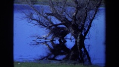 1971: trees and fence posts in a field seem to be flooded with water Stock Footage