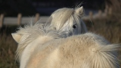 Cuddly ponies cute animals Stock Footage