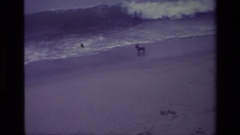 1977: how to celebrate their vacation in seashore, dog and waves Stock Footage