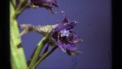 1975: zoom in a flower small sized AGATE SPRINGS MONTANA Stock Footage