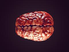 Realistic brain illustration Stock Illustration