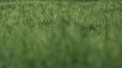 Green Meadow - shallow depth of field Stock Footage
