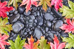 Frame of Maple Tree Leaves on Rocks Stock Photos