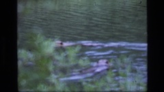 1973: animals swimming in a large body of water SCAPEGOAT WILDERNESS MONTANA Stock Footage