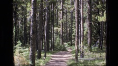 1973: a trail through the woods SCAPEGOAT WILDERNESS MONTANA Stock Footage