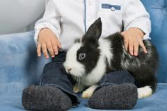 Little boy hugging a furry rabbit, sitting in the armchair Stock Photos