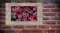 Photo frame of red leaves in winter on brick wall,  with snow effect Stock Footage