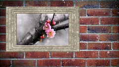 Photo frame of pink plum flower in winter on brick wall,  with snow effect Stock Footage