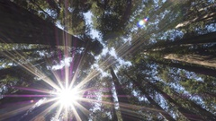 Time Lapse of the California Redwood Forest and the Sun Flaring Through Trees Stock Footage