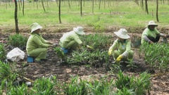 Workers on the farm growing vegetables Stock Footage