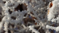 4k rime on the branches of bushes with horizontal movement Stock Footage
