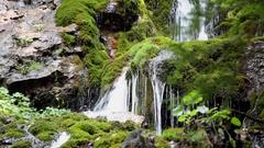 Large moss masses growing on mountain stream rocks Stock Footage