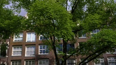 View Of Historical Buildings Through Trees In Amsterdam, Shot From A Moving Boat Stock Footage