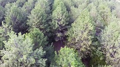 Aerial.  Up Over  wood , rear fly Stock Footage