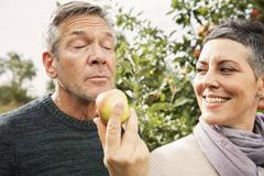 Woman holding apple out for man in orchard Stock Photos