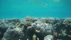 Corals in shallow water with fish Pacific ocean Stock Footage