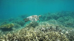 Underwater green sea turtle over coral reef Stock Footage