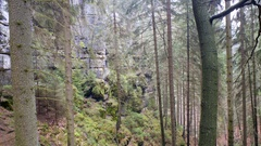 Tall trees in forest, rock formations, Germany Stock Footage