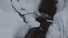 Focus change from snowy branch to a small river in winter forest, Full HD shot Stock Footage