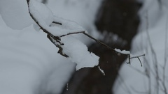 Focus change from snowy branch to a small creek in winter forest, 4k shot Stock Footage