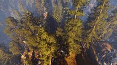 Aerial view of a north american forest at fall 3d rendering Stock Illustration