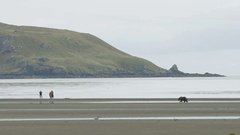 Medium wIde Shot of Hikers Photographing Grizzly Bear Along Shore Stock Footage