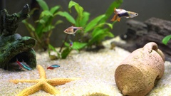 Tropical fishes in a little decorative aquarium part 3 Stock Footage