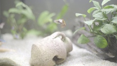 Tropical fishes in a little decorative aquarium part 1 Stock Footage
