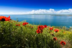 Poppies on the bank of the lake in Armenia Stock Photos