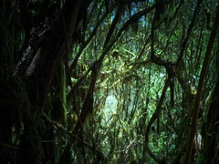 Mystery dark forest with old mossy trees and scary silhouettes of green branches Stock Footage