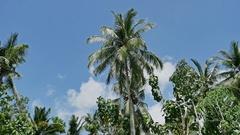 Lonely Palm Tree Tropic Island Nusa Penida Indonesia 4k Stock Footage